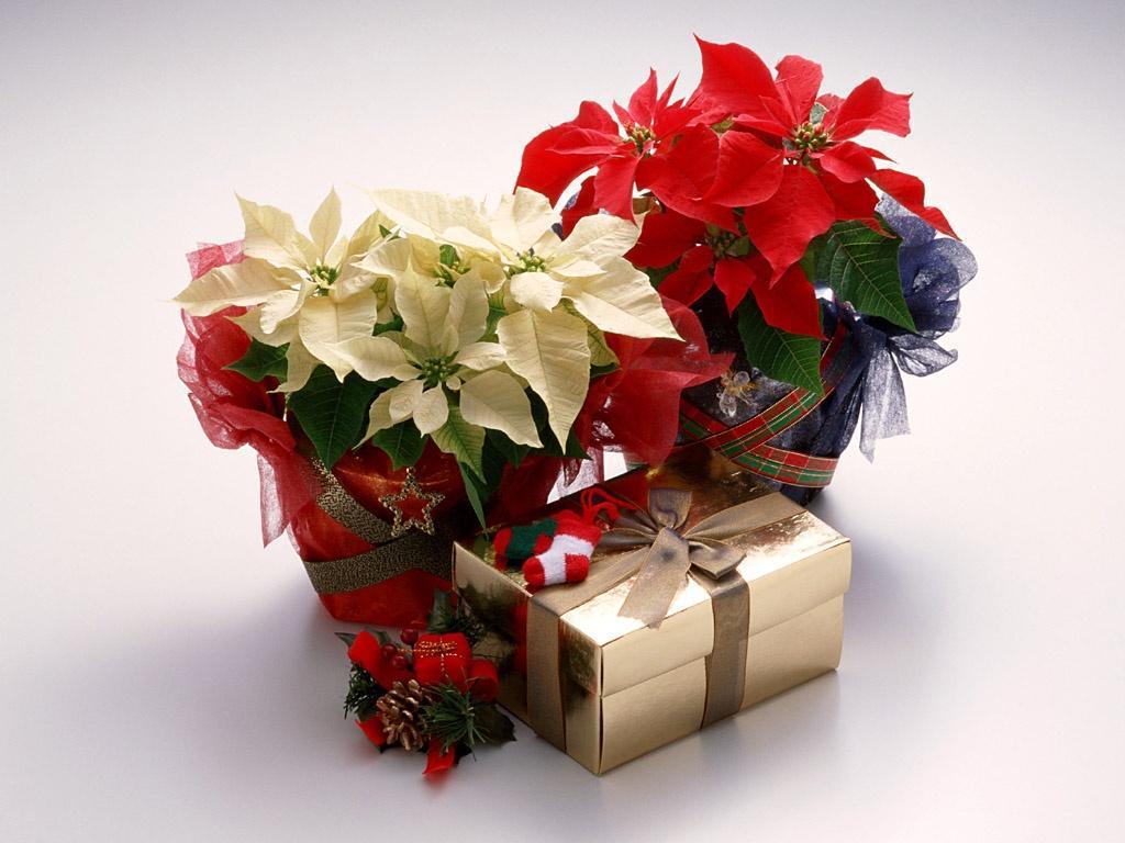 Сеть, подарок девушке цветок в горшке